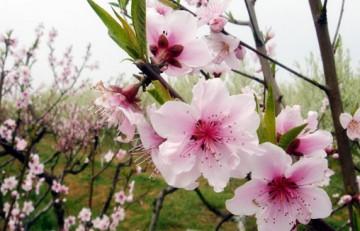 Đôi tình nhân mùa xuân